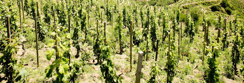 Tour de vinhos pelo vale do Ródano