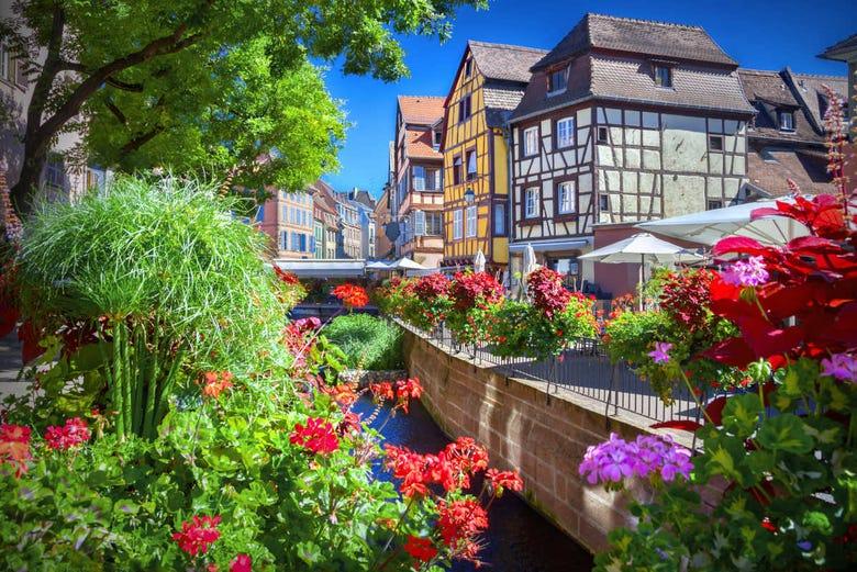 ,Tour por Estrasburgo,Excursión a Ruta de vinos de Alsacia