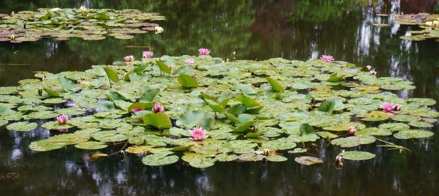 Excursión a la Casa de Monet en Giverny