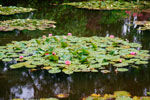 Claude Monet's House & Gardens in Giverny Tour
