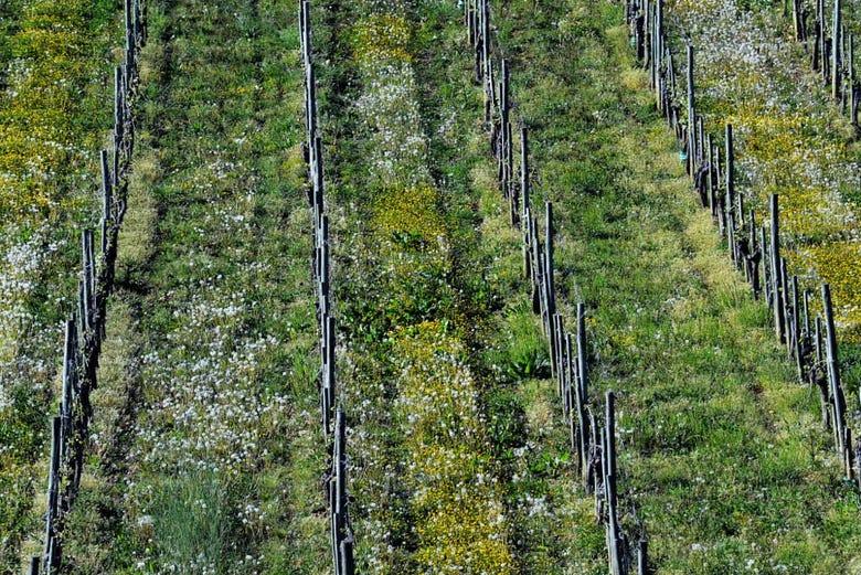 Visite d'un domaine viticole avec dégustation de vin