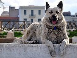 Perro en Atenas