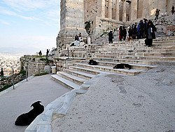 Perros en la Acropolis