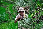 Agricultor reconvertido al turismo