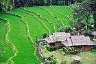Arrozal en Bali