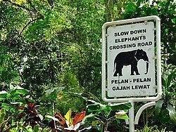 Cuidado, elefantes cruzando