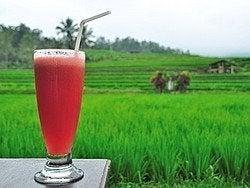 Tomando un zumo de sandía junto a los arrozales