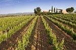 Ruta de los vinos y cavas catalanes