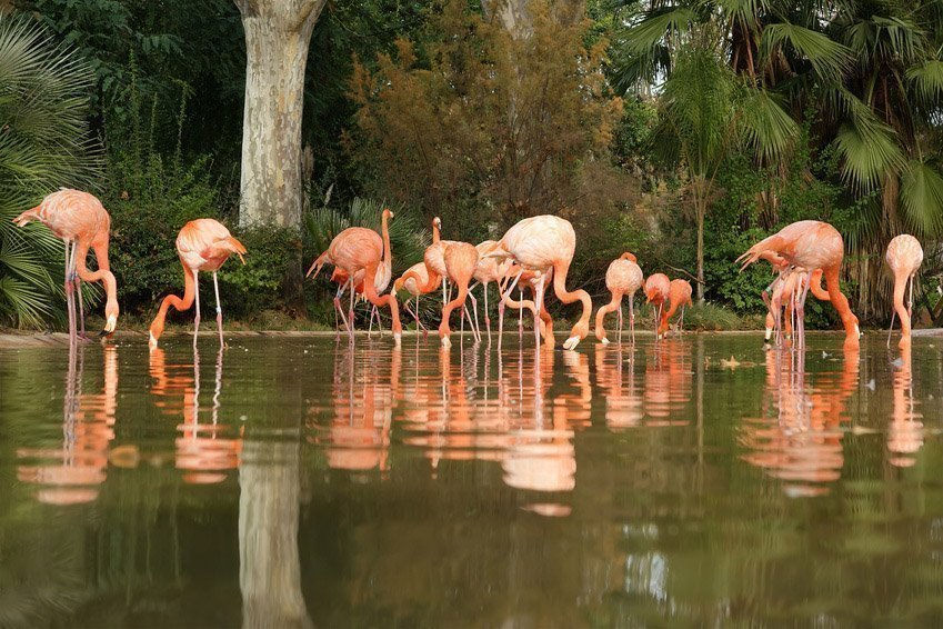 Zoo Barcelona barcelona zoo opening times tickets and address