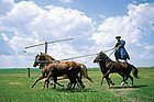Excursion a la Puszta, espectaculo de caballos