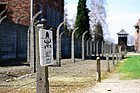 Auschwitz, ¡alto!