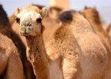 Excursión a Al Ain