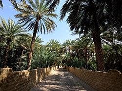 Oasis de Al Ain