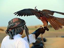 Espectáculo de halcones en el desierto