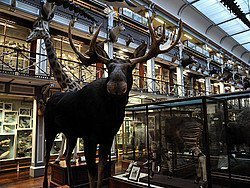 Museo de Historia Natural de Dublin