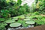 Giardino Botanico Reale di Edimburgo