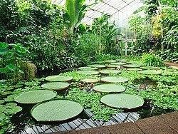 Real Jardin Botanico de Edimburgo, invernadero