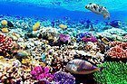 Buceo y Snorkel en Egipto