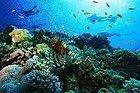 Buceando en Sharm el Sheik