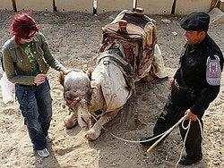 Egipto es seguro: Policía turístico