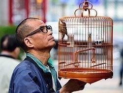 Mercado de los pájaros