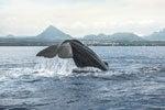 Avistamiento de ballenas en Río Negro