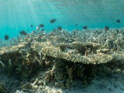 Arrecife de Isla Mauricio