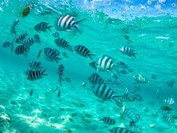 Fondo marino de Isla Mauricio