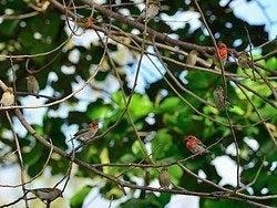 Pájaros típicos de la isla
