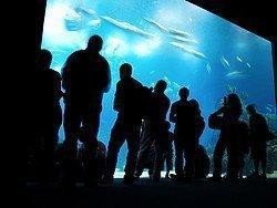 Oceanário, main aquarium