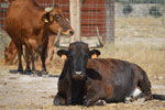 Excursión a una ganadería de toros bravos