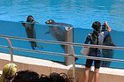 Faunia: Focas y leones marinos