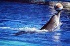 Golfinho do Zoo Aquarium
