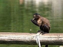 Faunia: Mono