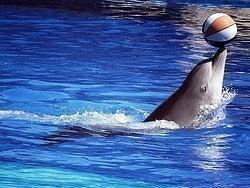 Delfinario del Zoo Aquarium