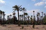 Palmeral de Marrakech