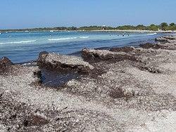 La Posidonia: Algas