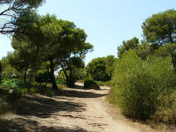 Camino a Cala Macarella