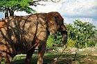 Zoo de Miami, elefante