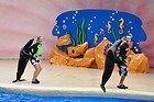 Miami Seaquarium, leoes marinhos