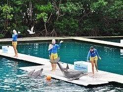 Miami Seaquarium, Show de Flipper