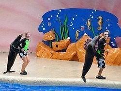 Miami Seaquarium, leones marinos