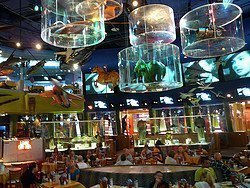 Restaurante Planet Hollywood Nueva York