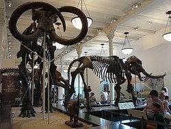 Museo Historial Natural, dinosaurios