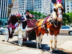 Horse drawn carriage in New York