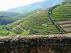 Douro Valley, vineyards