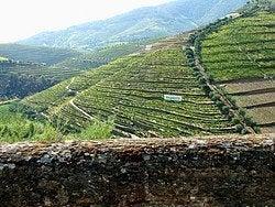 Viñedos en las terrazas del Valle del Duero