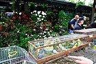 Mercado de flores y pajaros de París
