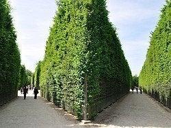 Gardens of Versailles, labyrinth