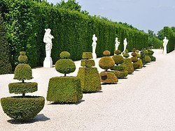 Gardens of Versailles, hedgerow of bushes and statues
